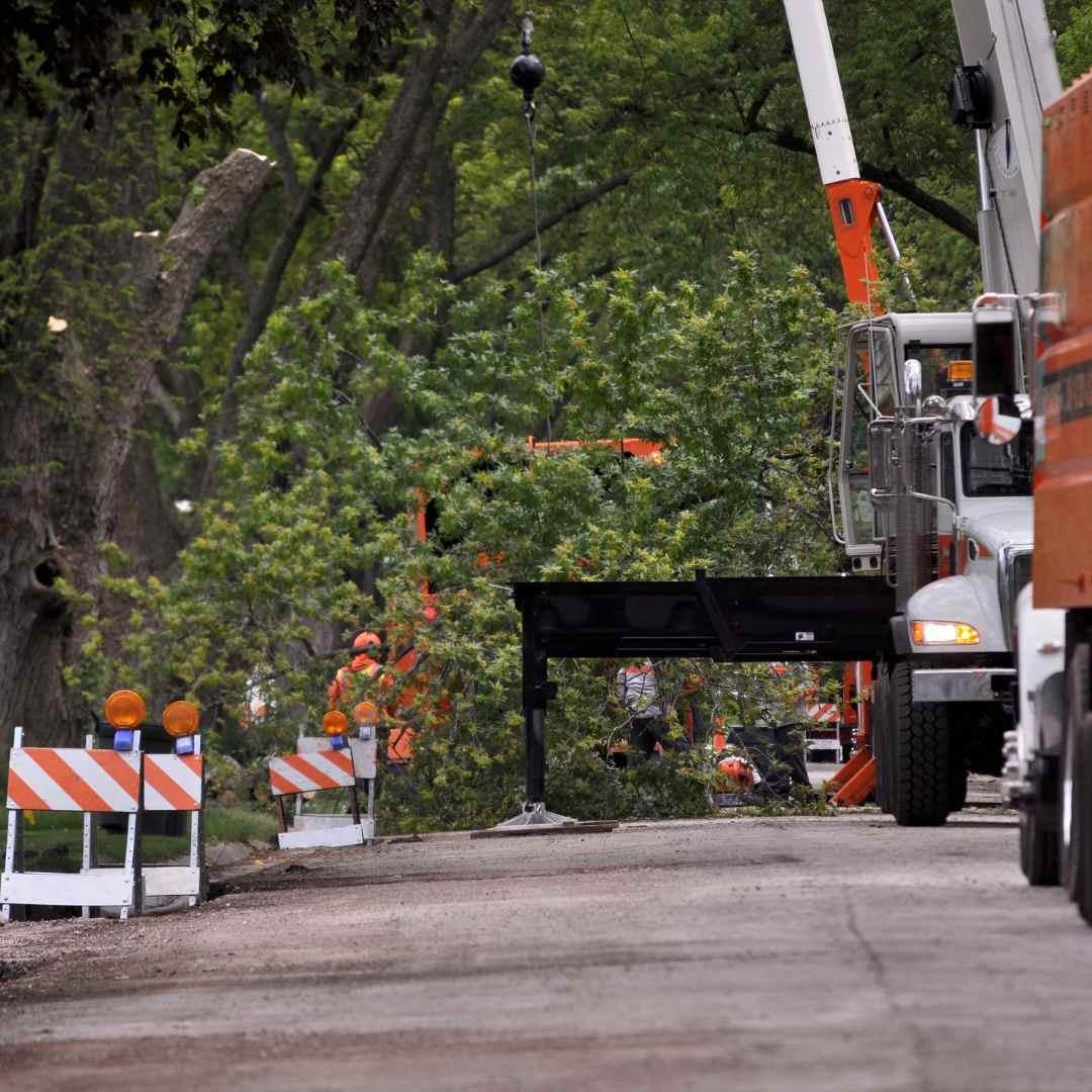 Tree Service Durham NC Emergency Tree Service