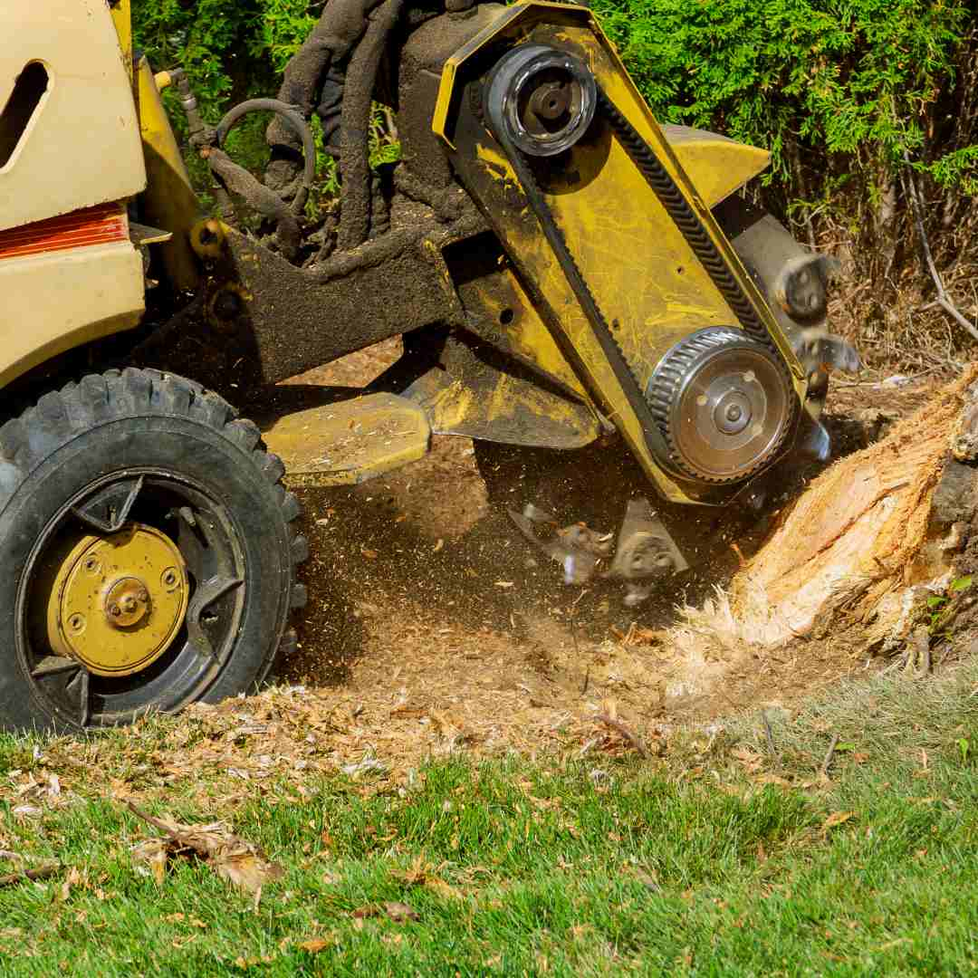Tree Service Durham NC - Stump Removal 1
