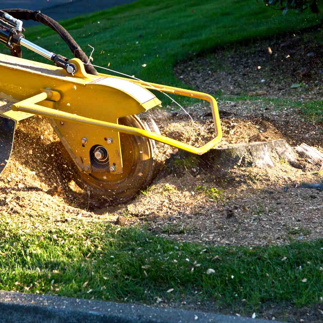 Tree Service Durham NC -Stump Removal