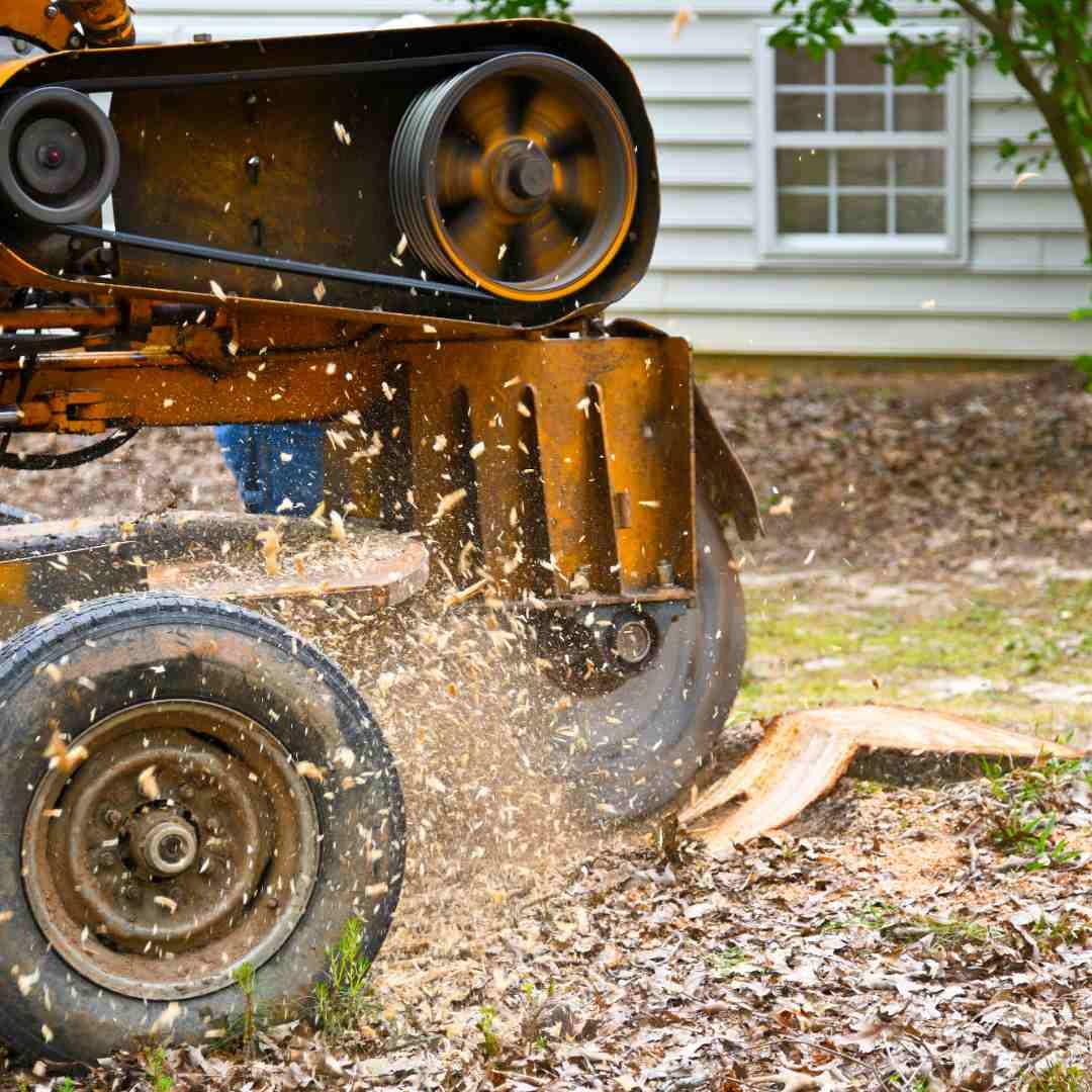 Tree Service Durham NC - Stump Removal 3
