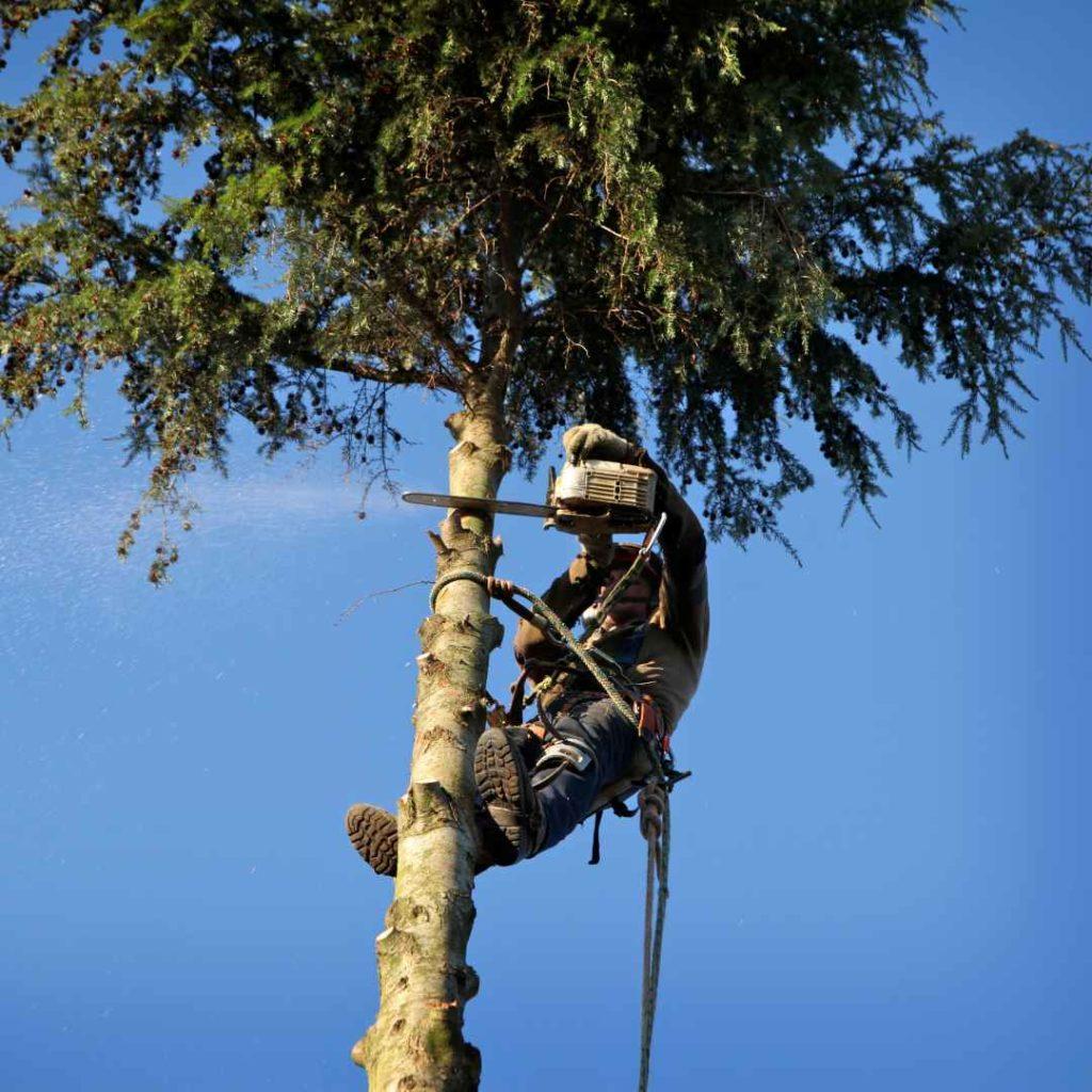 Tree Service Durham NC - arborist 10