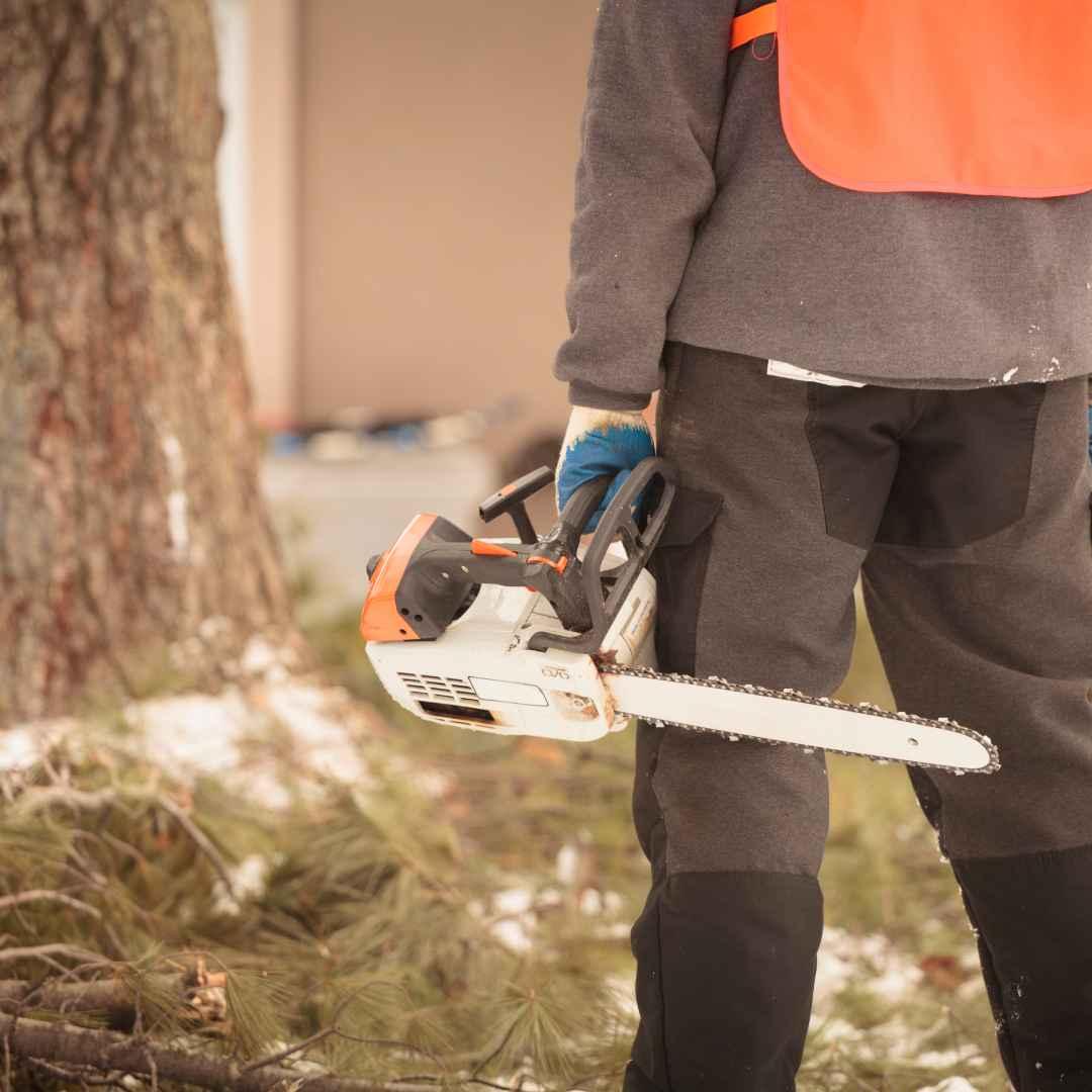 Tree Service Durham NC - arborist 12