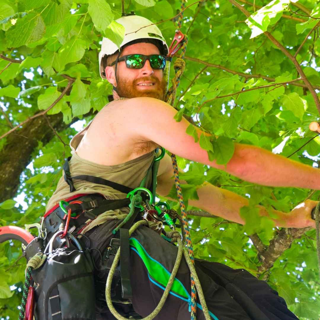 Tree Service Durham NC - arborist 9