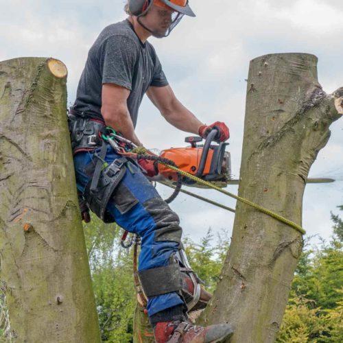 Tree Service Durham NC pruning 3