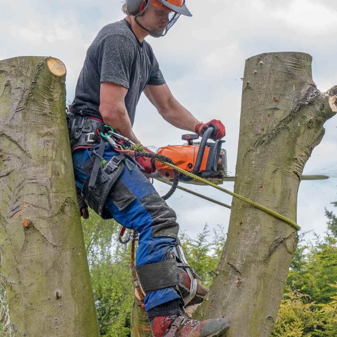 Tree Service Durham NC- pruning 3