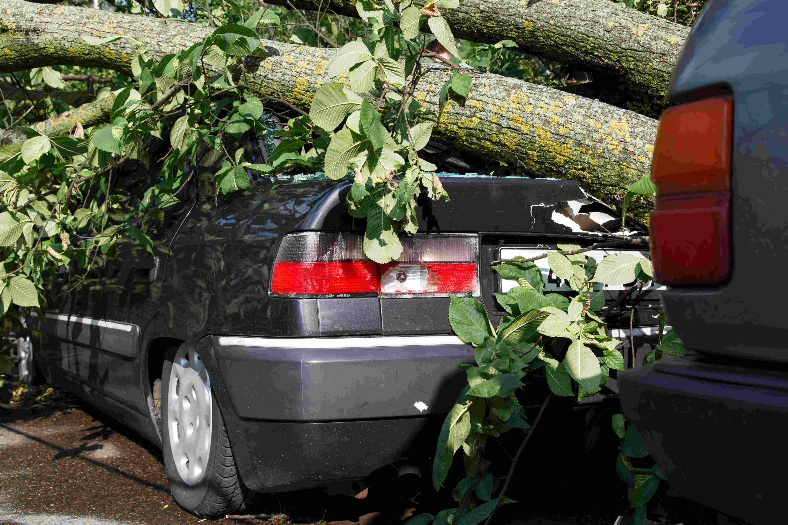 Tree Services Sandy Springs GA -Emergency 3