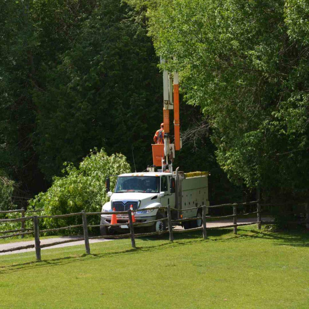 Tree Services Sandy Springs GA -Worker 4