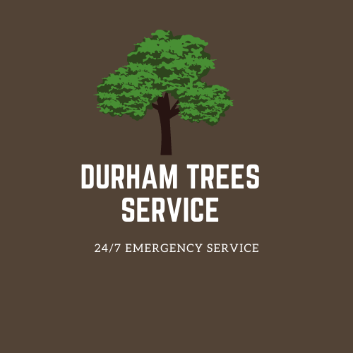 Durham Trees Service- Logo